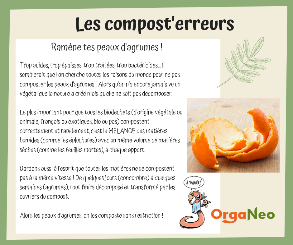 Compost'erreurs_agrumes